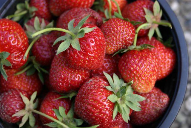 aardbeien, net geplukt