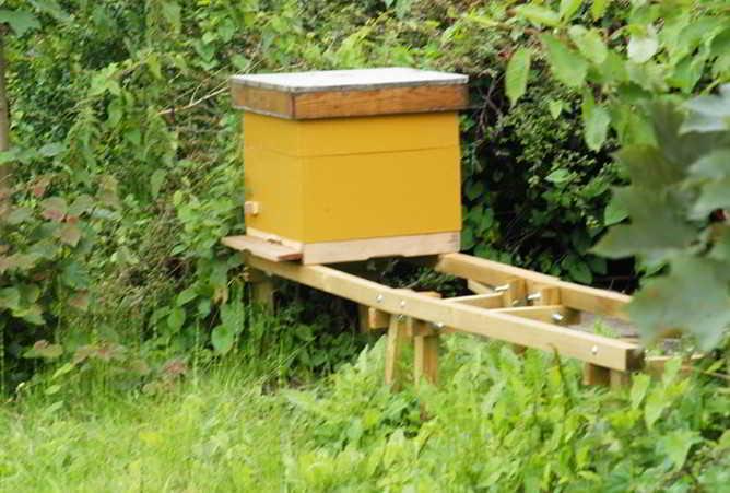 een bijenkorf