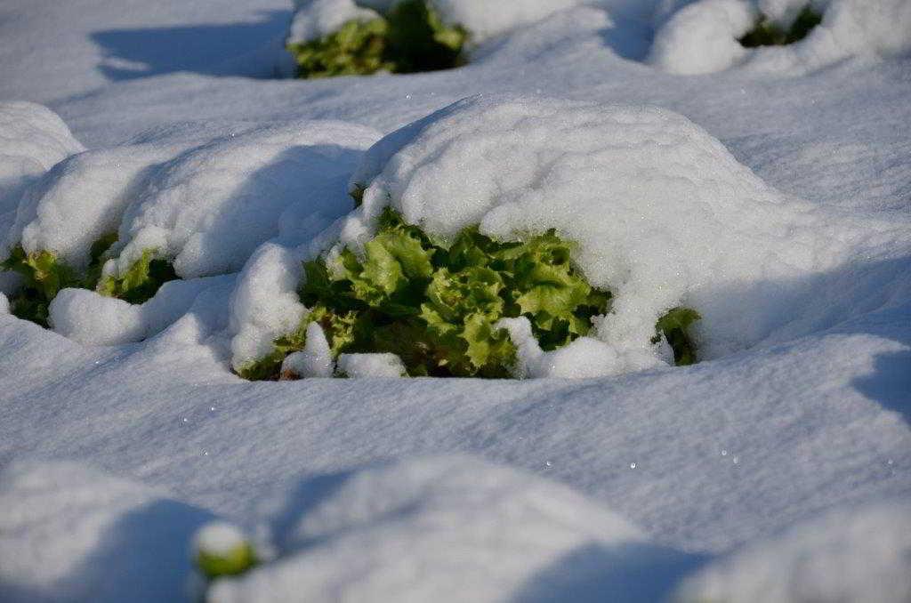 Een Winterse Foto Reportage 009