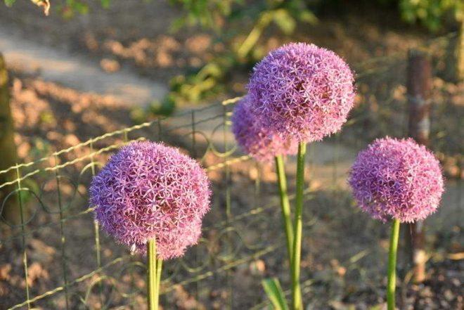 preien bloemen